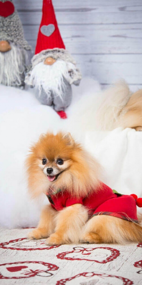 Babydog Boutique Christmas